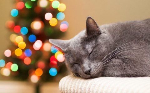 Over katten & kerstbomen
